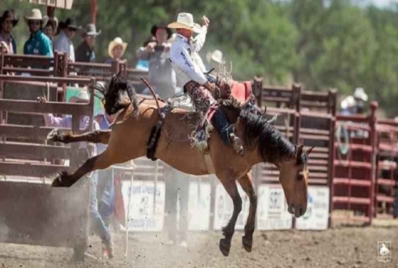 Cowboys Reno Rodeo Return